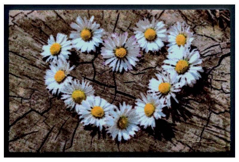 Fußmatte Gänseblümchen-Herz