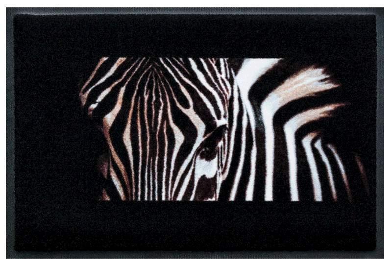 Nahaufnahme Zebra