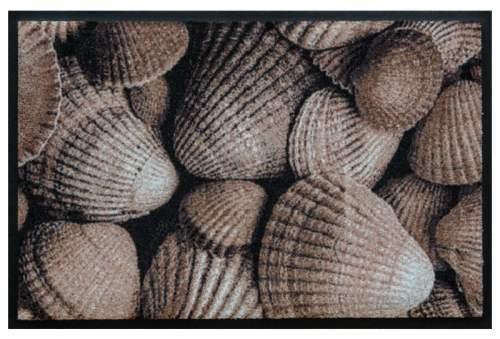 Fußmatte Braune Muscheln
